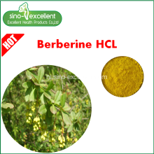 Berberis Aristata-extract